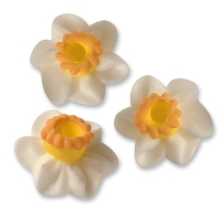 100 pcs Sugar narcissus